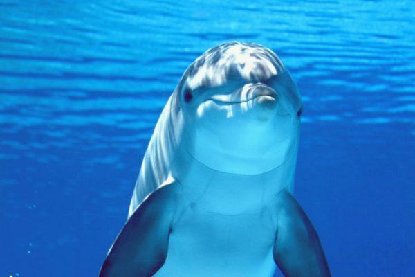 Работает ли «Дельфинотерапия»?