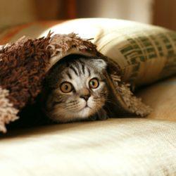 Ваша подушка вызывает беспокойство, головные боли, кашель и раздражение кожи. Чем ее заменить?